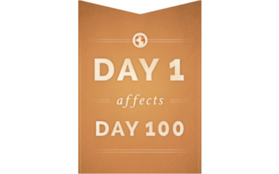 """What Are """"DAY 1 affects DAY 100 Habitudes""""?"""